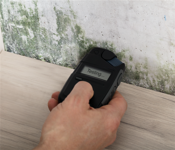 Mold Remediation Five Factors That Affect the Cost of Mold Removal